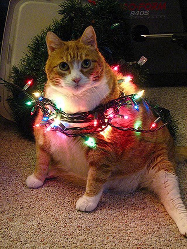 Толстые коты :)