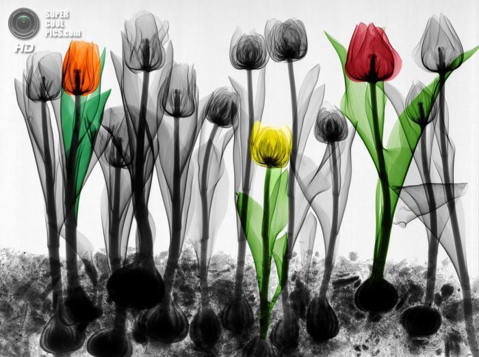 Рентгеновское искусство Ари Вант-Рита