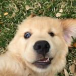 Новая и интересная подборка милых и забавных фотографий животных...