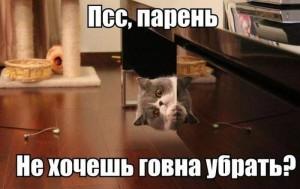podborka_86