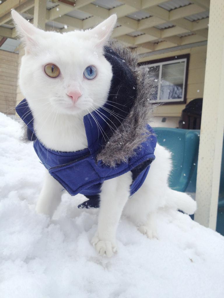 funny_animals_03811_021