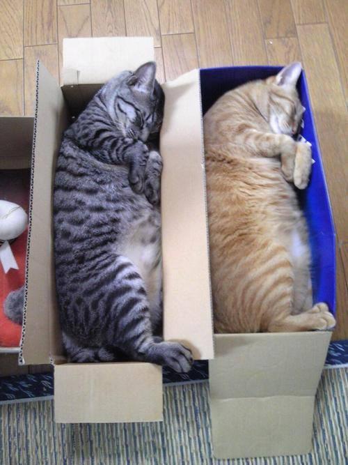 funny_animals_03811_029