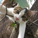 милые и забавные фотографии животных