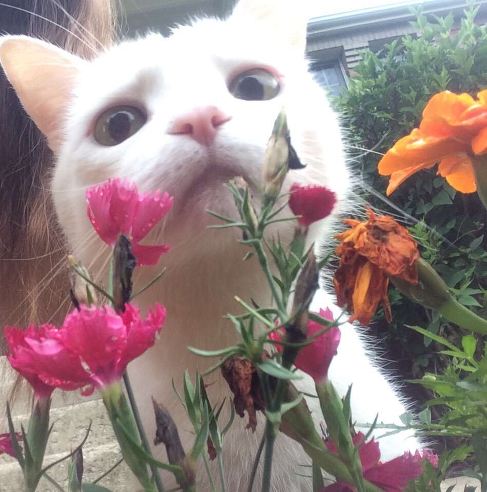 funny_animals_04370_026
