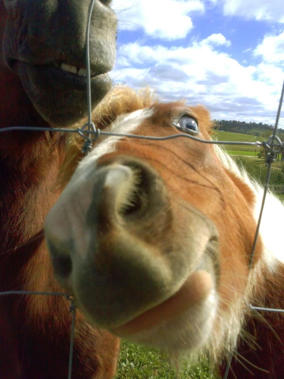 funny_animals_04370_031