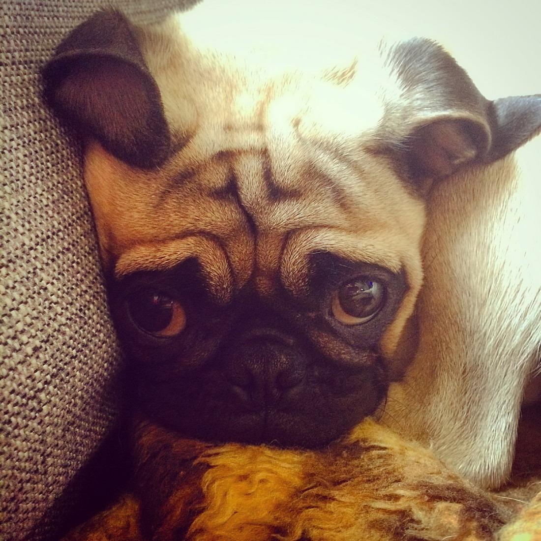 funny_animals_04370_032