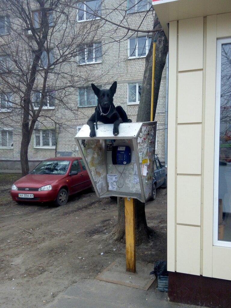 prikolnie_kartinki_zapilili-ru_88