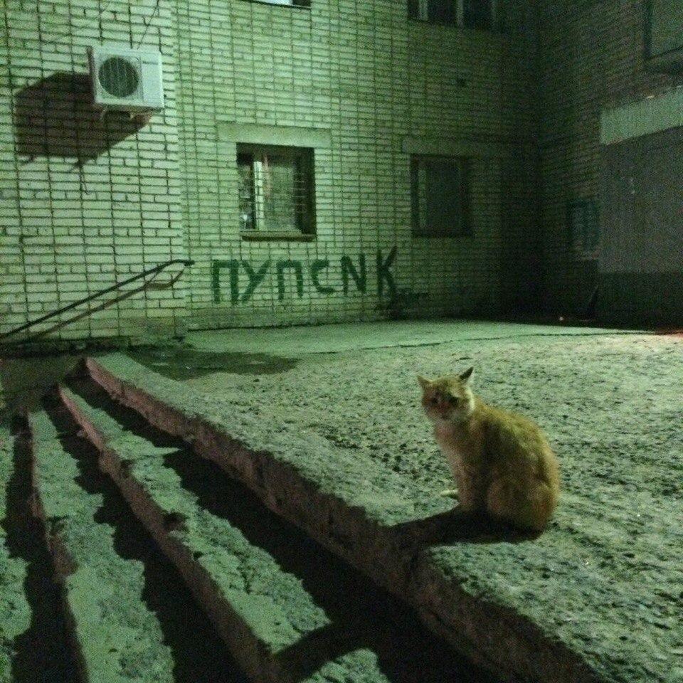 zapilili.ru веселые картинки, видео