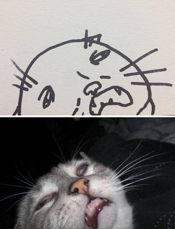 Забавные картинки котов (20 фото)