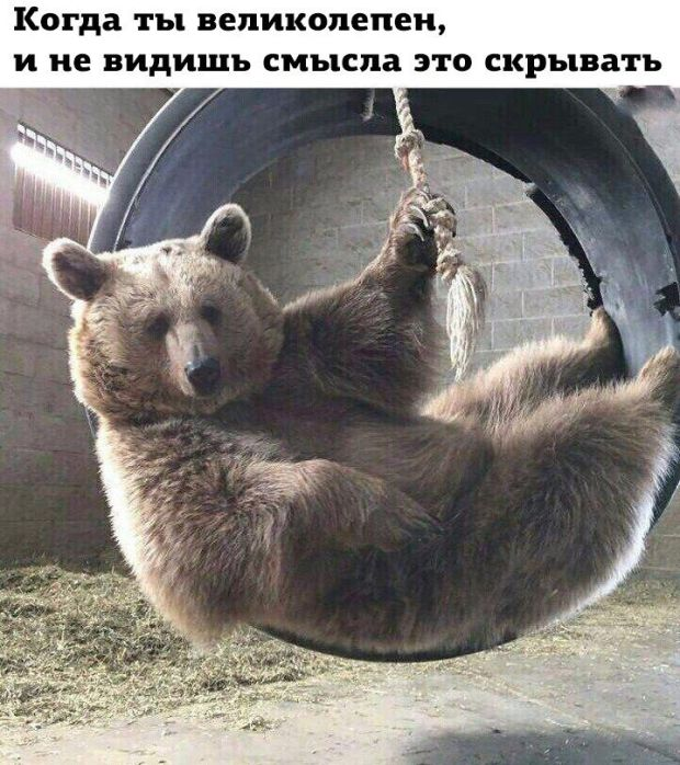 smeshnie_foto_zapilili.ru_18