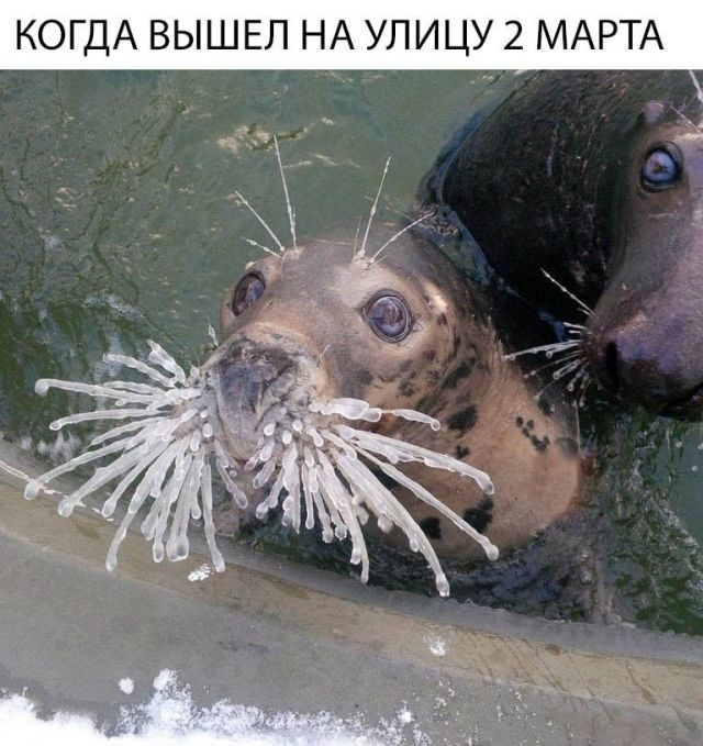 prikolnie_kartinki_na_zapilili.ru_58