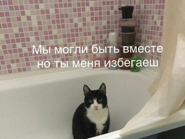 prikolnie_kartinki_na_zapilili.ru_65