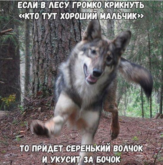 prikolnie_kartinki_na_zapilili.ru_87