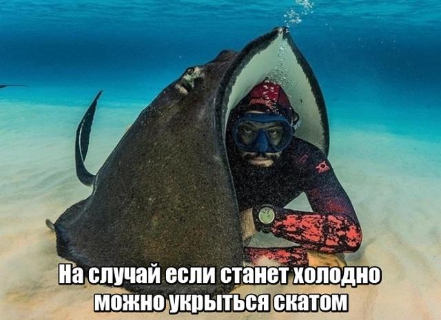 zabavnie_kartinki_zapilili.ru_94