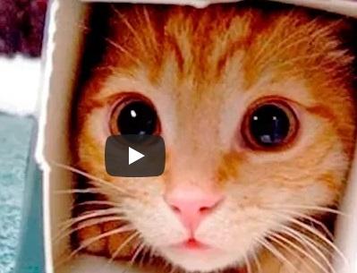 Приколы с Котами — Смешные коты и кошки