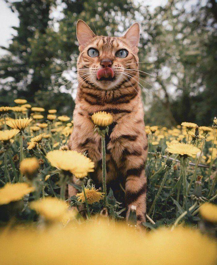 Самые милые и забавные животные ( 50 фото )