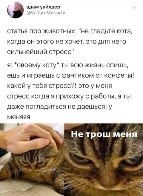 smeshnie_kommenti_zapilili.ru_89